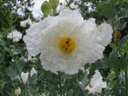 Arboretum flower