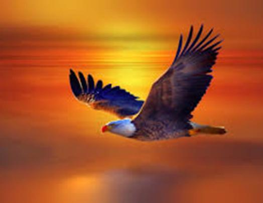 eagle-image