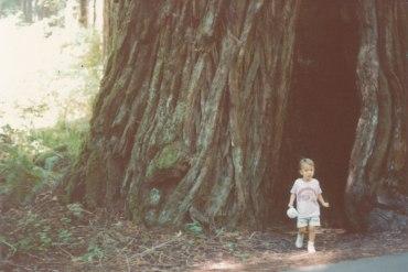 redwood_0001