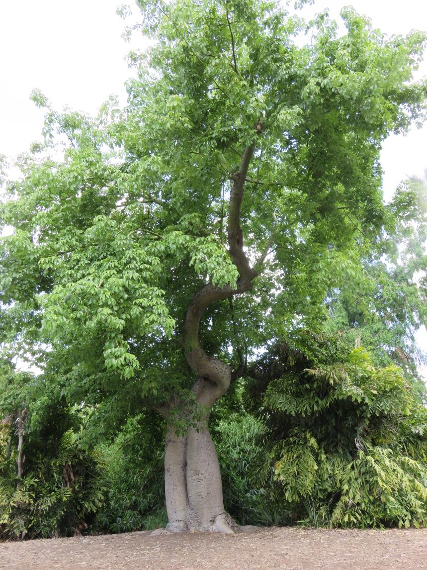 twisted-tree-2