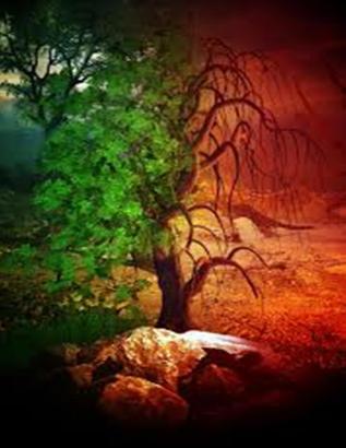 liminal-tree-between-ld