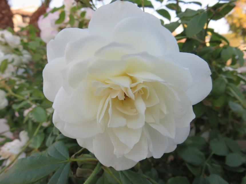 white-flower