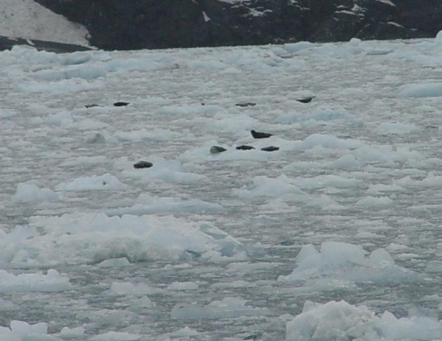 floating-ice2