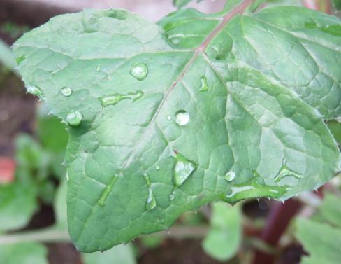 after-rain-2