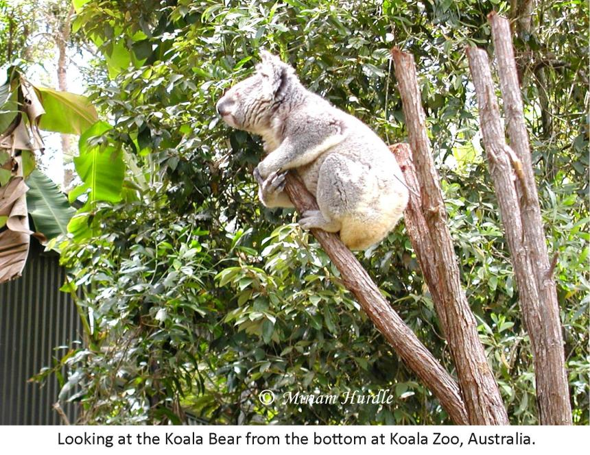 Bottom.koala bear