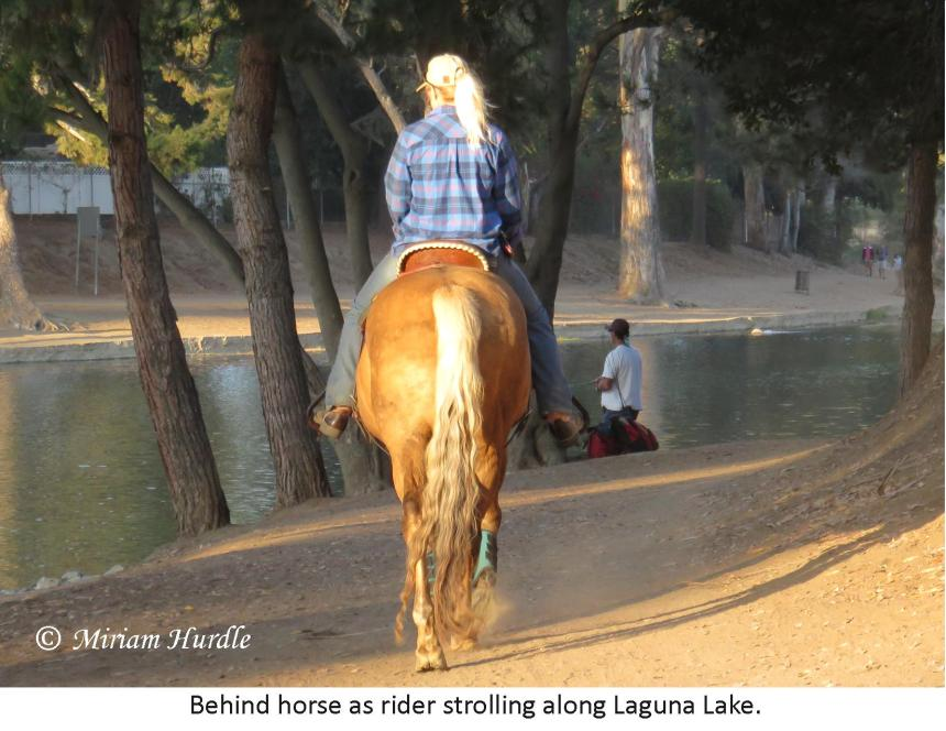 horse rider.behind