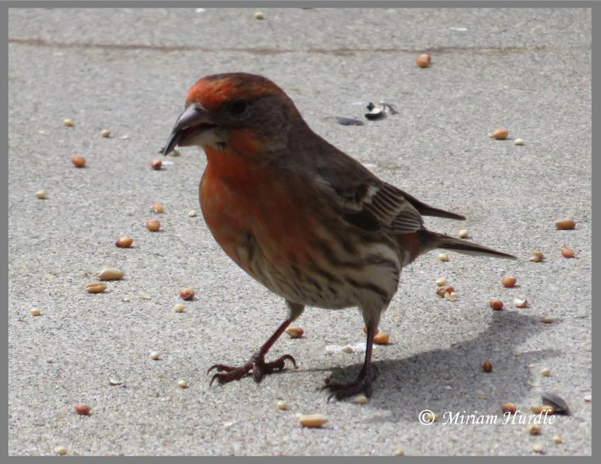 Territory bird 2