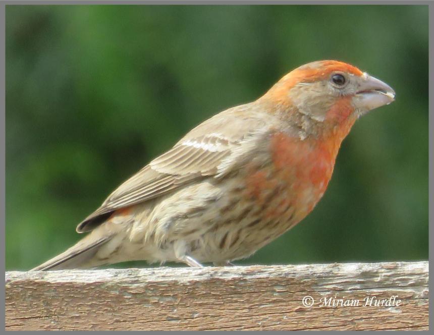 Territory bird 3