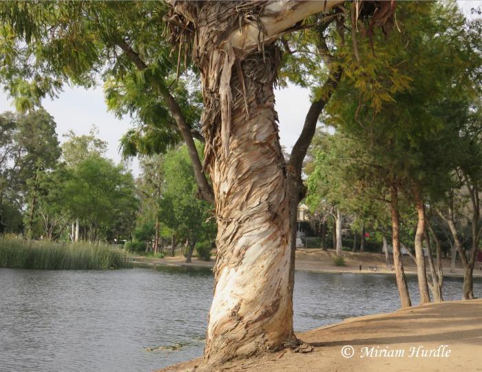 #285 Laguna Lake 2