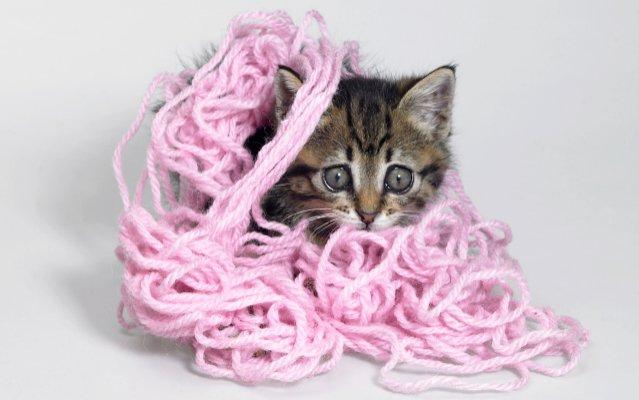 kitten-tangled-640x509