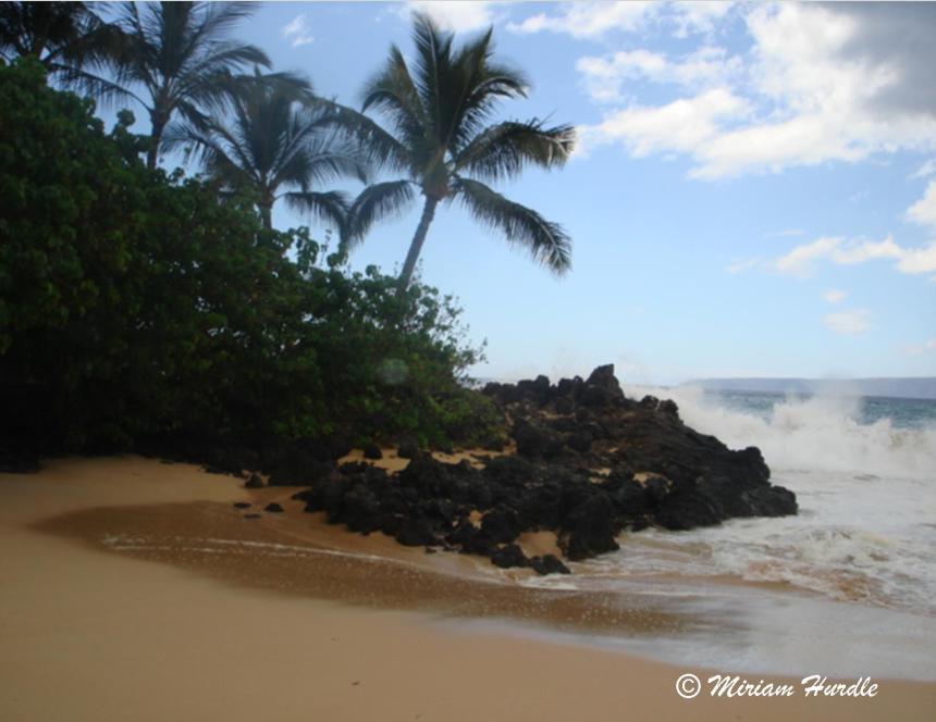 Hot Maui 1