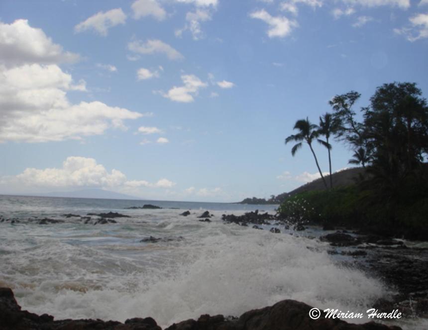 Hot Maui 2