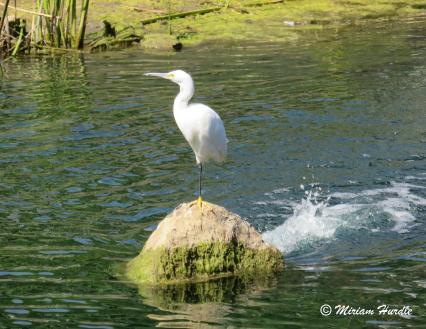 Laguna Lake 4