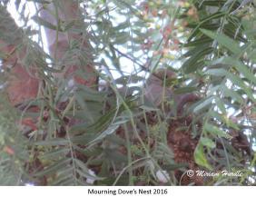 gray jay nest 1