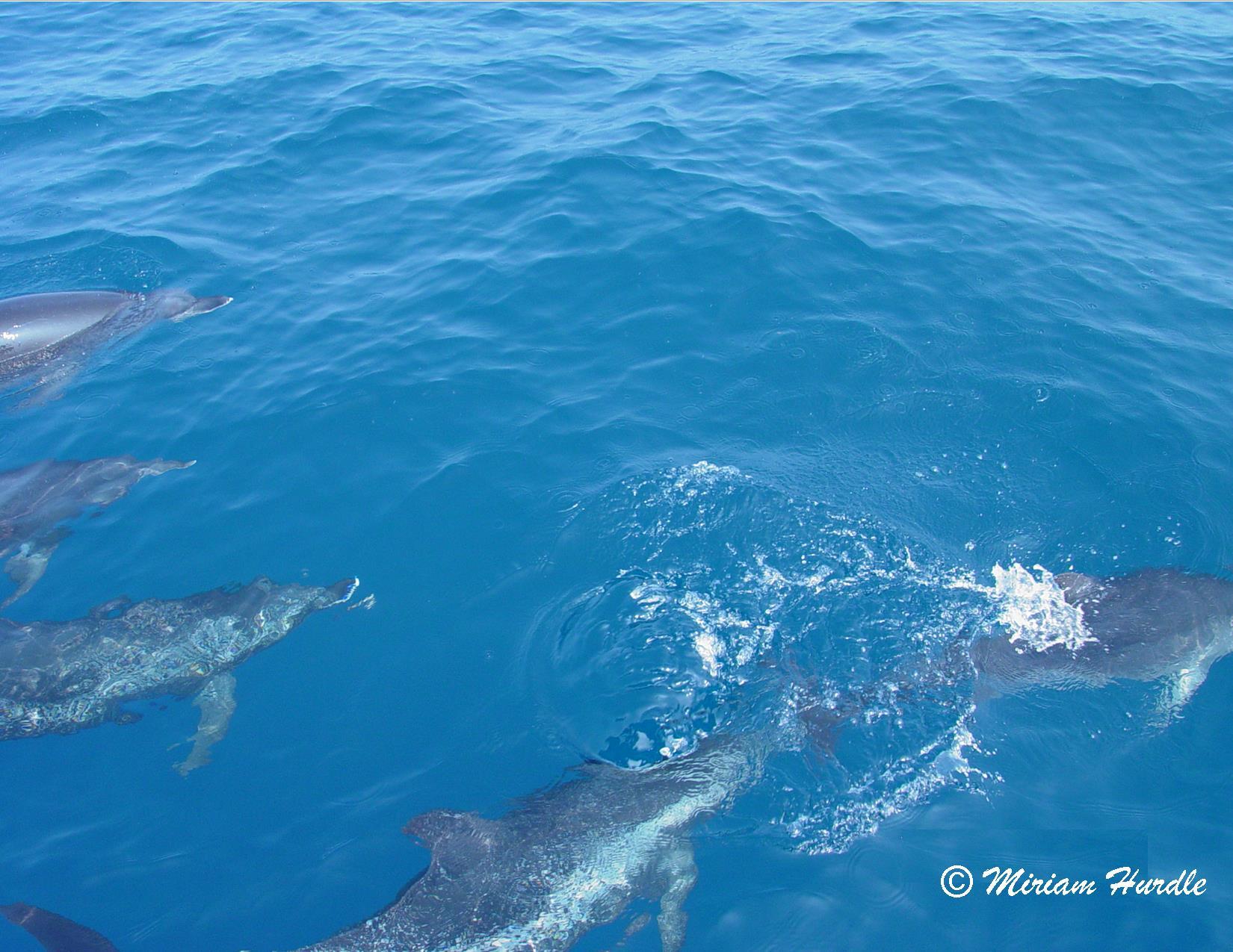 Trancient - dolphin 2