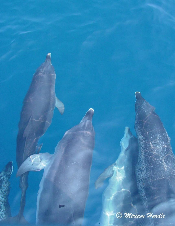 Trancient - dolphin 3