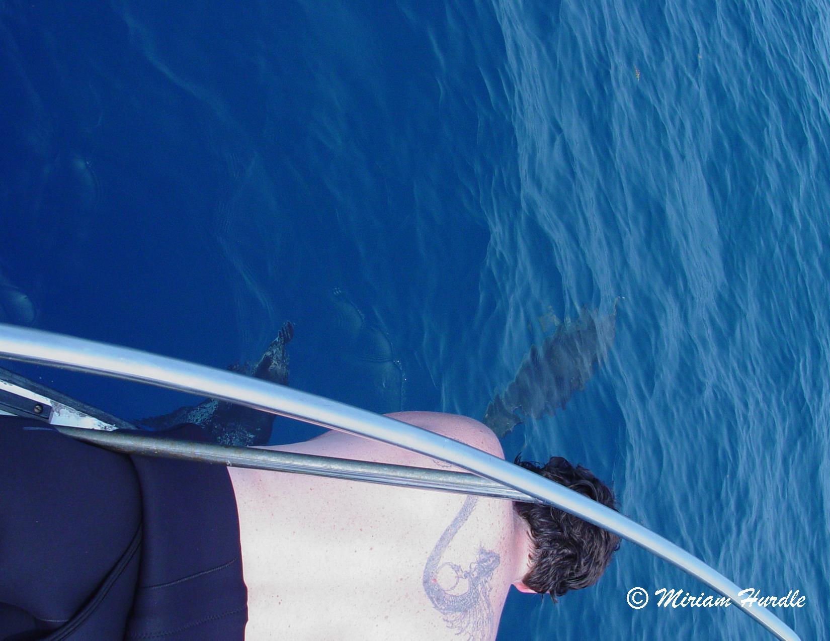Trancient - dolphin 5