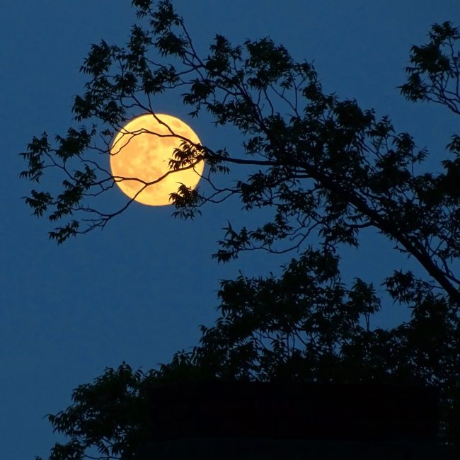 moon-full-7-8-2017-Patti-Weeks-Greenville-SC-e1499639127809