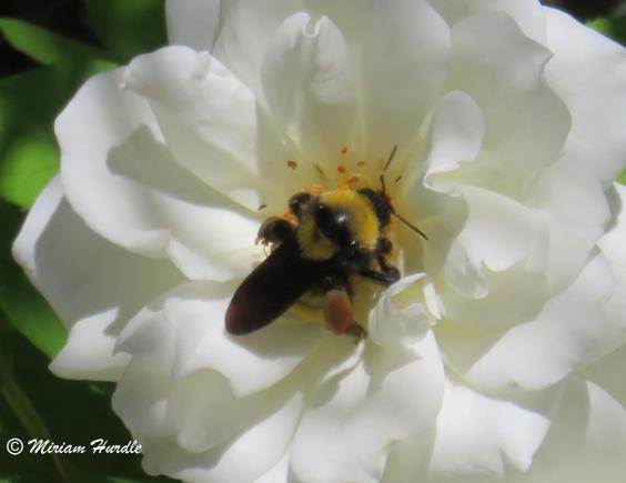 bumble bee 4