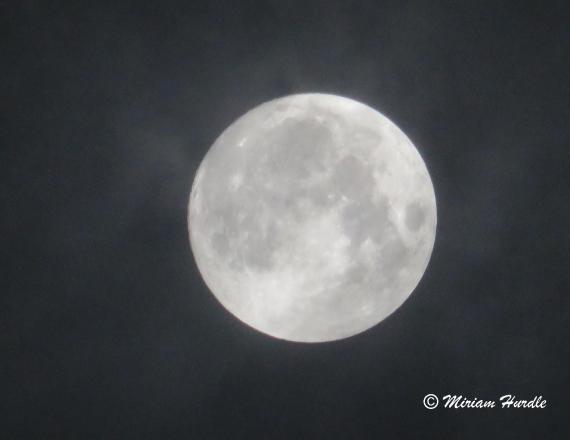 sun.moon 1