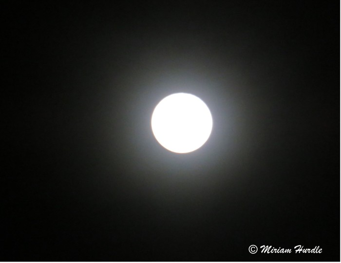 Super blue blood moon 8