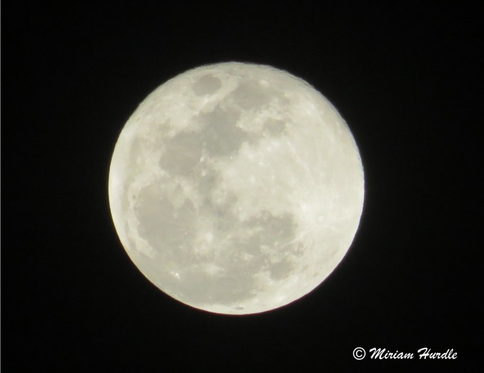 Super blue blood moon 9