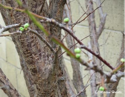bloosom 1a