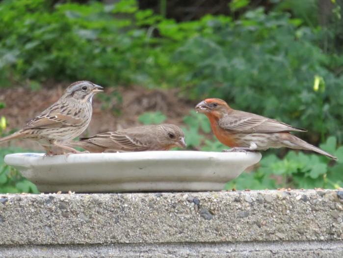 Nultiple birds