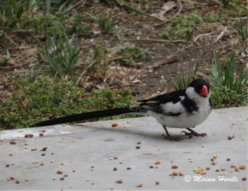 Whyhad bird 1