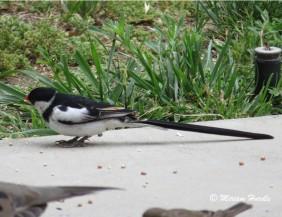 Whyhad bird 2