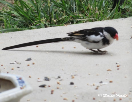 Whyhad bird 3