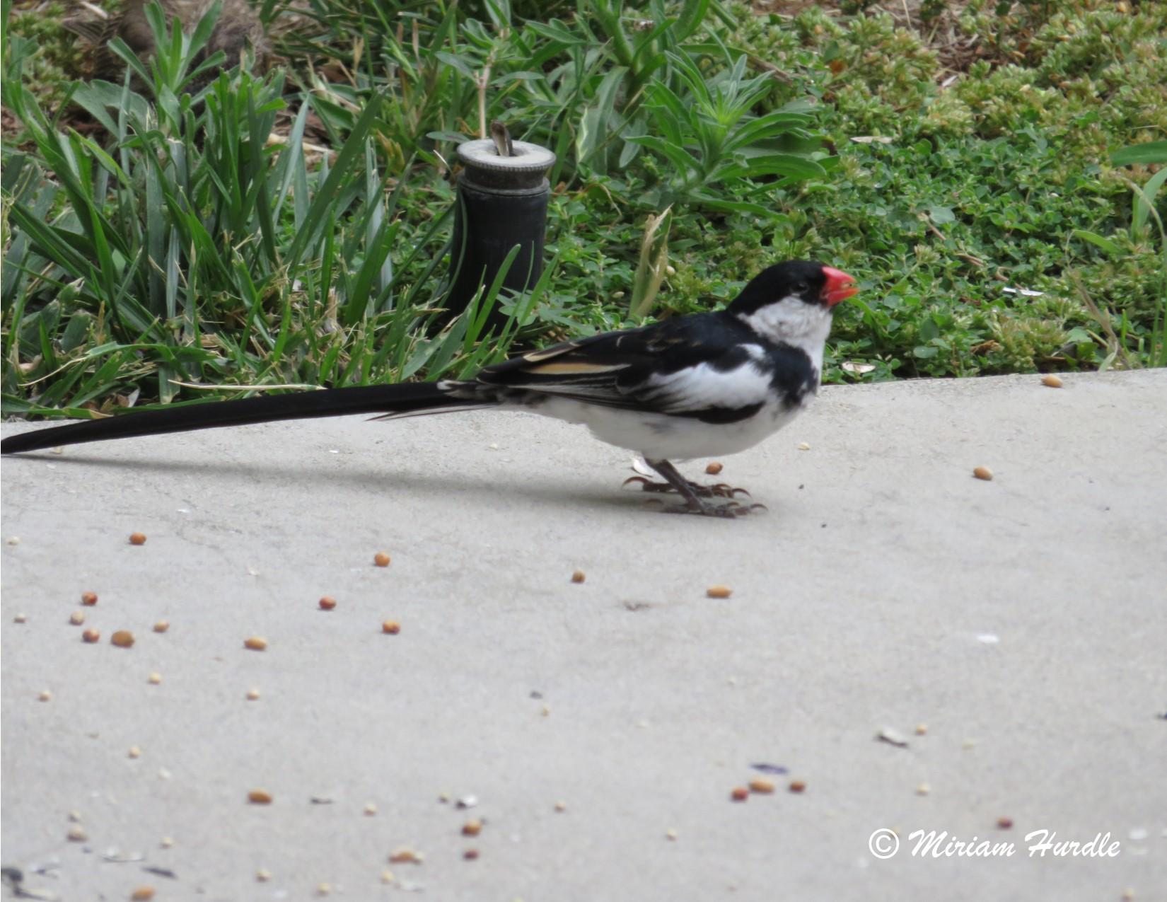 Whyhad bird 4