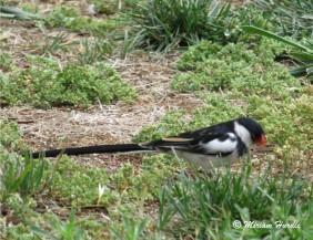 Whyhad bird 5