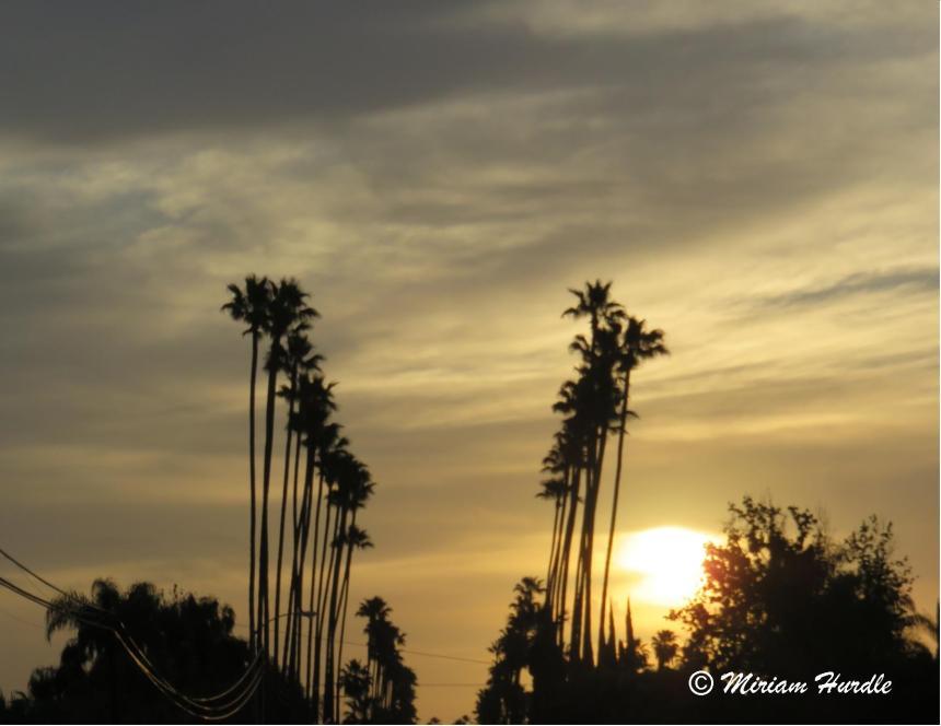 #292 queen palm 2