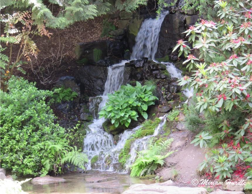 6.Rhododendron Garden1