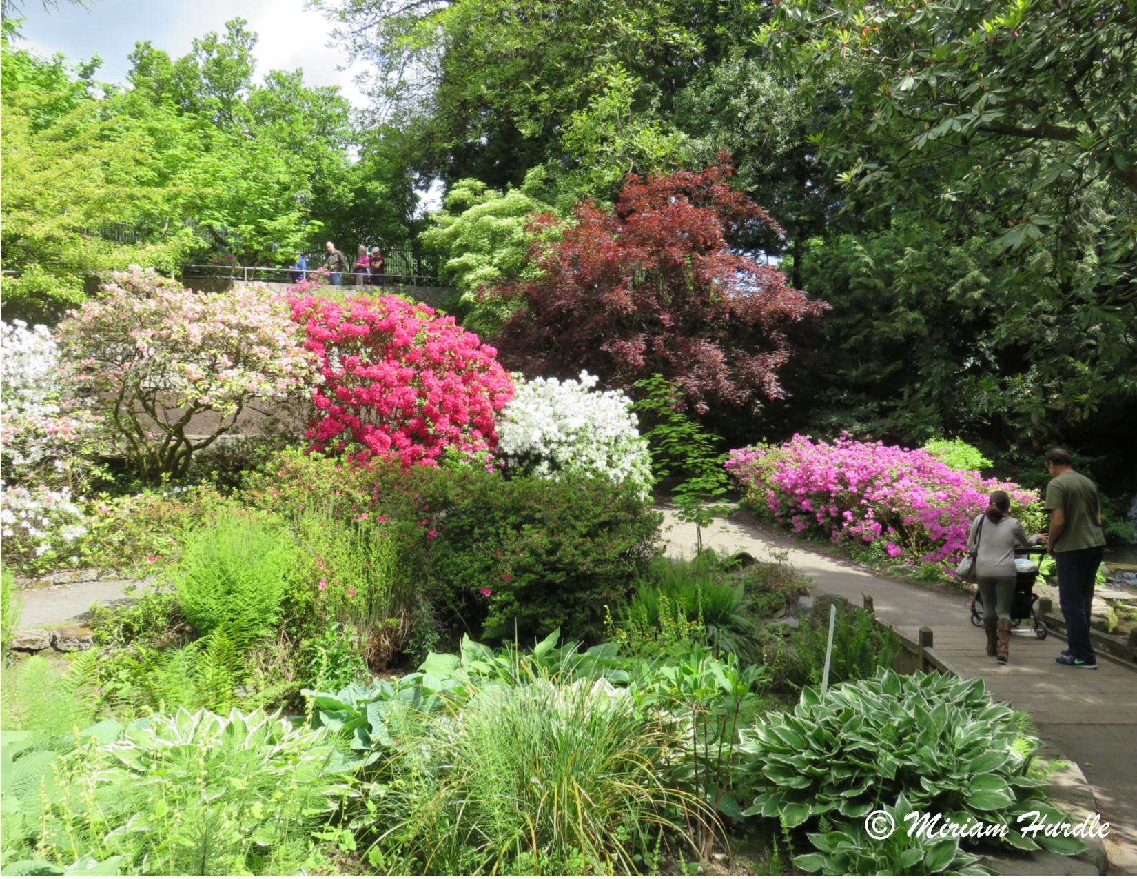 8.Rhododendron Garden1