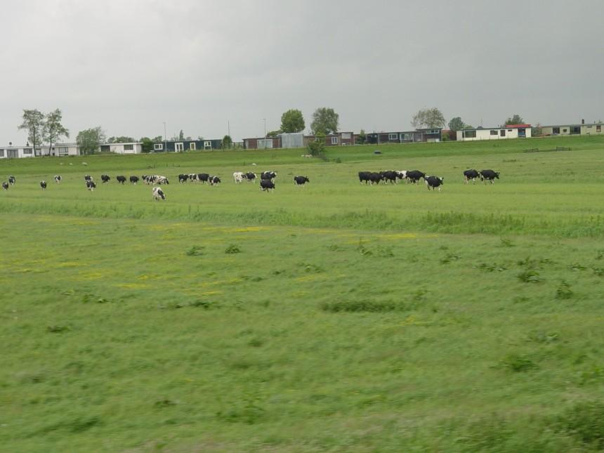 Amsterdam f59 DSC03875 (2)