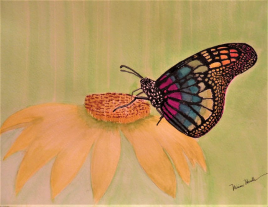 8.Cacoon Butterfly